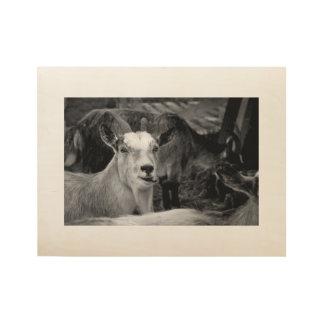 Norwegische goates Schwarzweiss-Fotoplakat Holzposter