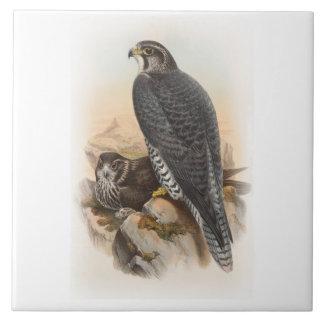 Norwegische Vögel Falke-Johns Gould von Fliese
