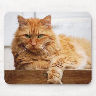 Norwegische Waldkatze, König der Katzen Mousepad