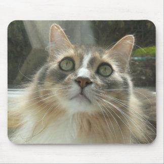 Norwegisches Waldkatzengrau und -WEISS Mauspads