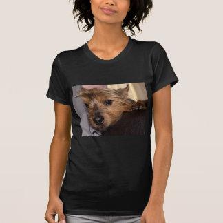 Norwich-Terrier chillin.png T-Shirt