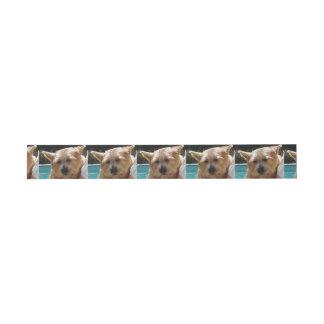 Norwich-Terrier Einladungsbanderole