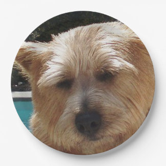 Norwich-Terrier Pappteller
