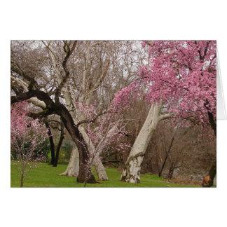 NOTECARD ~ Frühjahr in Chico, CA Karte