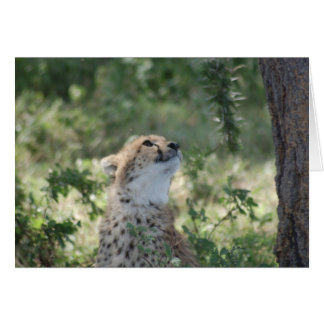 Notecard mit Gepard Karte