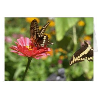 Notecard mit zwei Frack-Schmetterlingen Karte