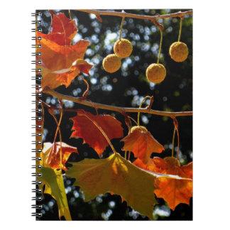 Notizbuch/persönliche Zeitschrift - Platane und Notizbücher