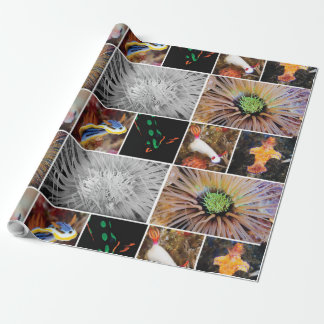 Nudibranchs u. Bengel-Packpapier Geschenkpapier
