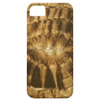 Nummulitekalkstein unter dem Mikroskop Hülle Fürs iPhone 5