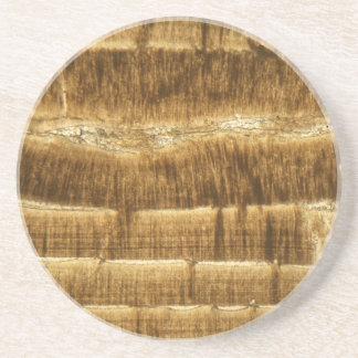 Nummulitekalkstein unter dem Mikroskop Sandstein Untersetzer