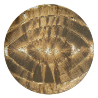 Nummulitekalkstein unter dem Mikroskop Teller