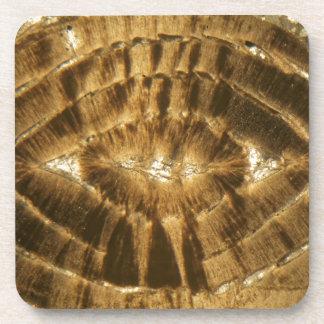 Nummulitekalkstein unter dem Mikroskop Untersetzer