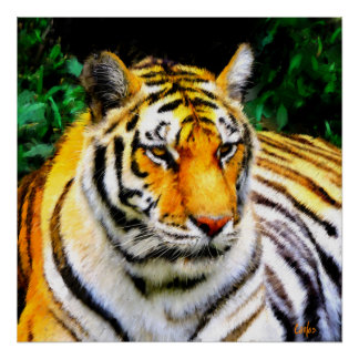 Oakland-Zoo-Tiger Poster