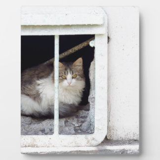 Obdachlose Katze beobachtet Straße Fotoplatte
