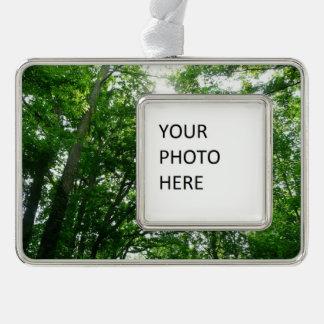 Oben schauen zu den Sommer-Bäumen Rahmen-Ornament Silber