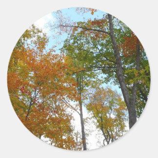 Oben schauen zum bunten Fall-Laub des Herbstlaub-I Runder Aufkleber