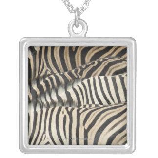 Obenliegende Ansicht von Burchells Zebra Versilberte Kette