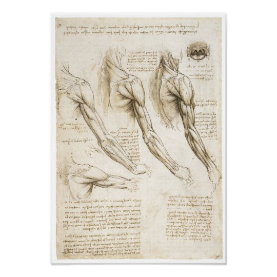 Oberflächliche Muskeln der oberen Extremität Poster | Zazzle