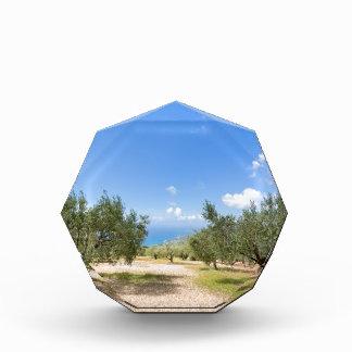 Obstgarten mit Olivenbäumen in Meer in Acryl Auszeichnung