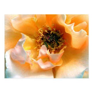 Öffnen Sie Rose Postkarte