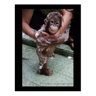 OFI Orang-Utan Waisen-Rettungs-Baby Jackat Postkarte