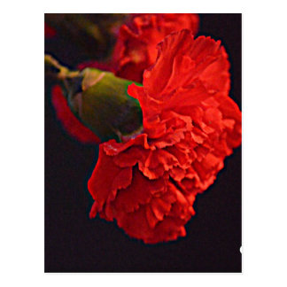 Ohio-Rot-Gartennelke Postkarte