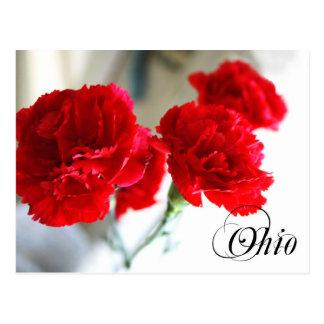 Ohio-Staats-Blume: Rote Gartennelke Postkarte