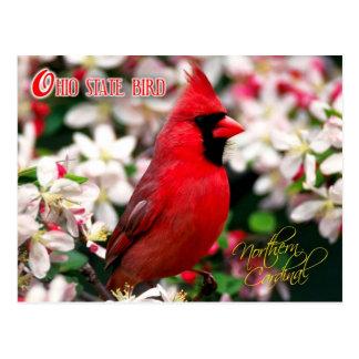 Ohio-Staats-Vogel - NordKardinal Postkarte