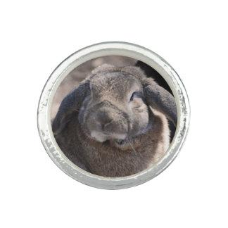 Ohriges Kaninchen Schmierölniederdrucks