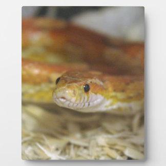oj die Schlange Fotoplatte