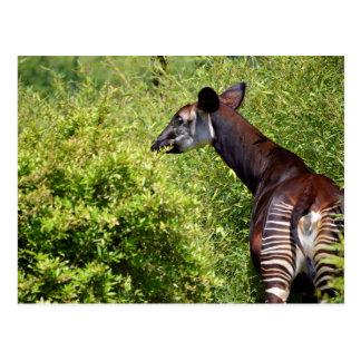 Okapi in der Vegetation Postkarte