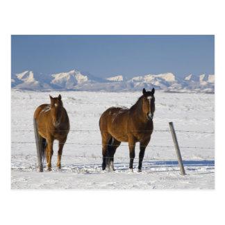 okotoks, Alberta, Kanada Postkarte
