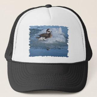 Oldsquaw band lang Ente auf Eis im Ozean an Truckerkappe