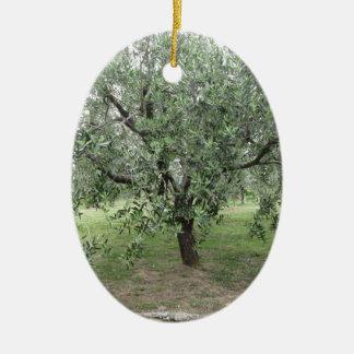 Olivenbaum im Garten. Toskana, Italien Keramik Ornament