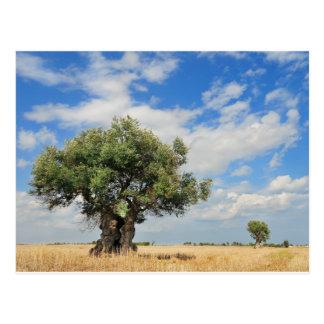 Olivenbaum Postkarte