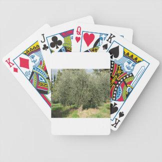 Olivenbäume an einem sonnigen Tag. Toskana, Bicycle Spielkarten