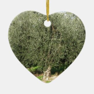 Olivenbäume an einem sonnigen Tag. Toskana, Keramik Ornament