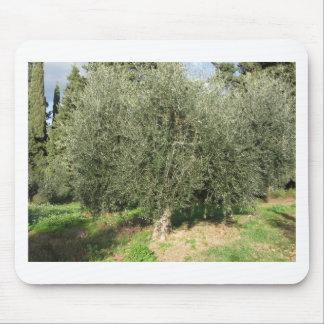 Olivenbäume an einem sonnigen Tag. Toskana, Mousepad