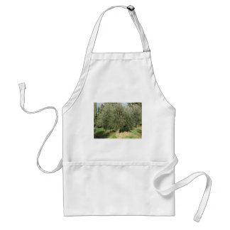 Olivenbäume an einem sonnigen Tag. Toskana, Schürze