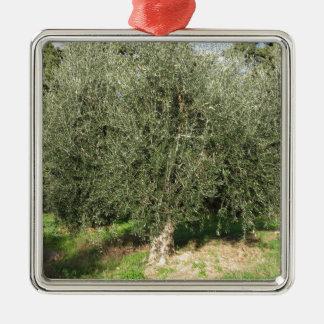 Olivenbäume an einem sonnigen Tag. Toskana, Silbernes Ornament