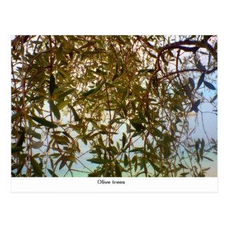 Olivenbäume Postkarte