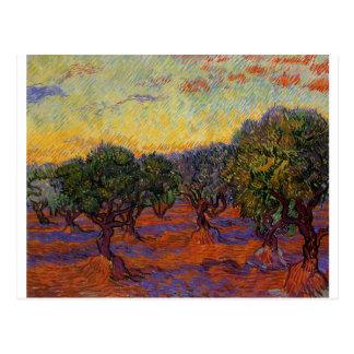 Olivenbäume - Vincent van Gogh Postkarte