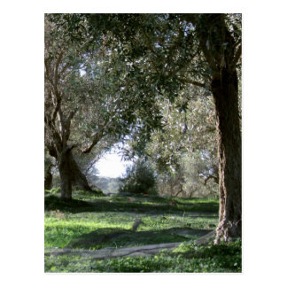 Olivenhain-Postkarte Postkarte