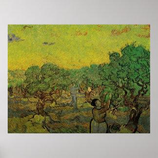 Olivenhain-Sammeln-Zahlen Van Gogh, schöne Kunst Poster