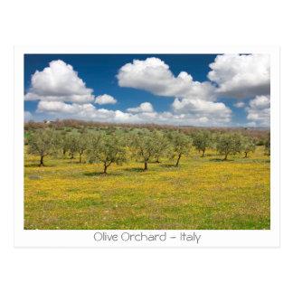 Olivgrüner Obstgarten Postkarte