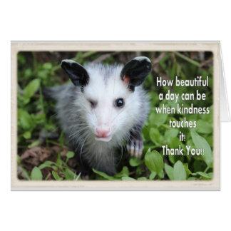 Opossum blinzelnd, danke zu kardieren karte