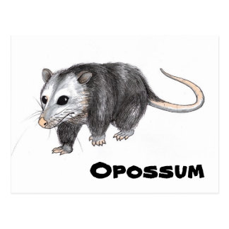 Opossum Postkarte