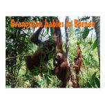 Orang-Utan Babys in Borneo Postkarten