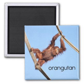Orang-Utan Kühlschrank-Magnet Quadratischer Magnet