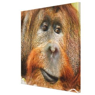 Orang-Utan Porträt Leinwanddruck